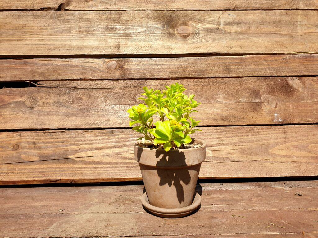Plante grasse terra cotta