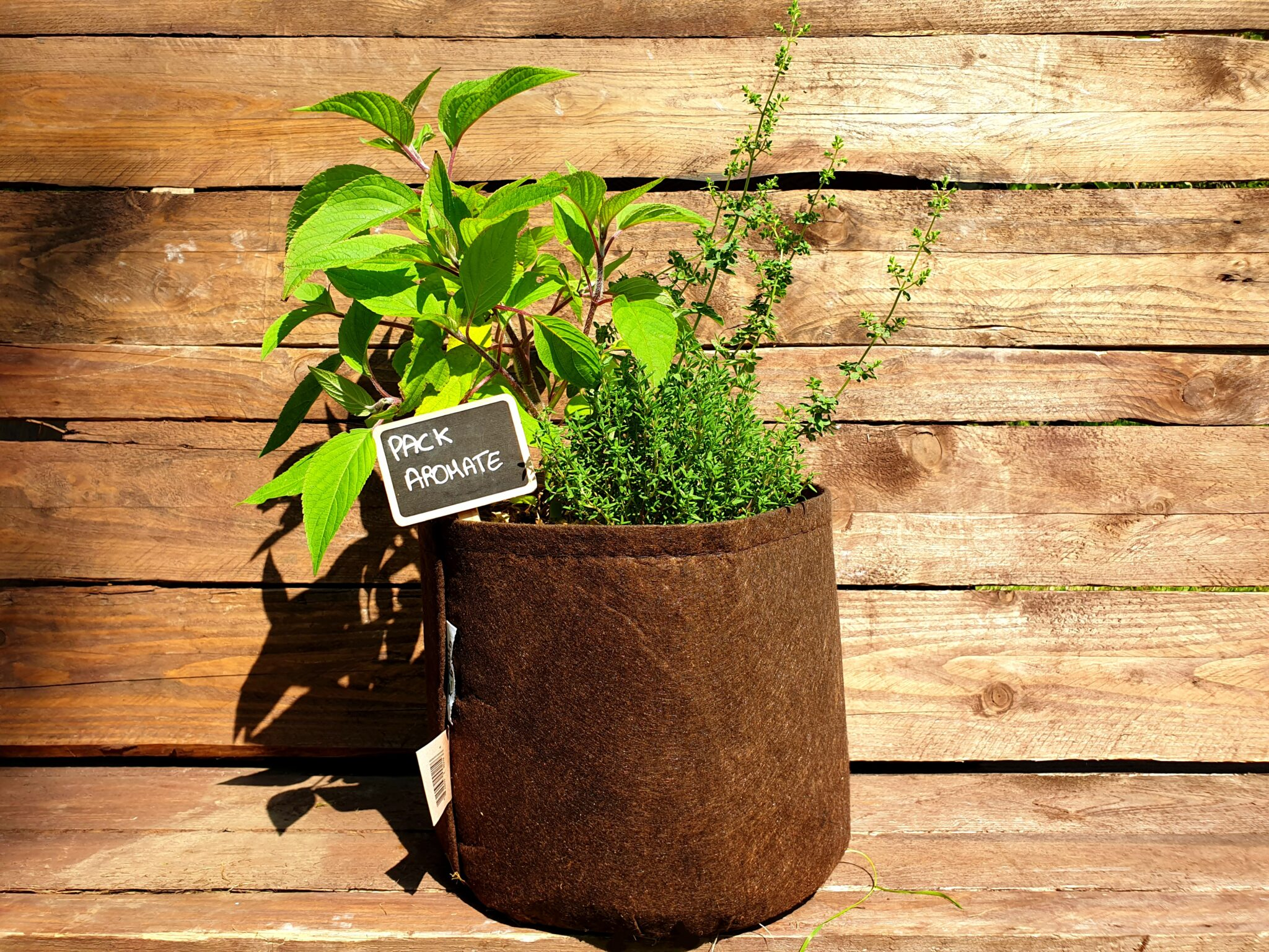 Assortiment sauge ananas-thym-origan